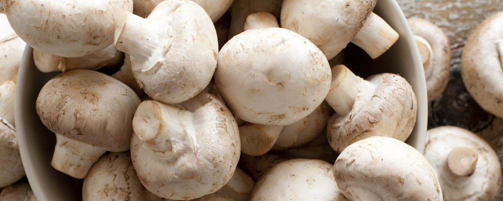 Pilze: Leckere Nährstoffpakete