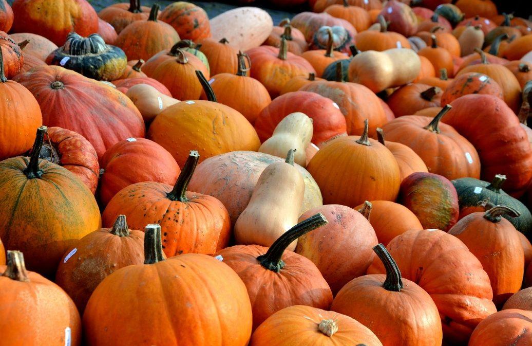 Bunte Gemüsevielfalt im Herbst