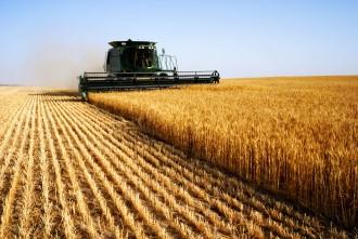 Getreideernte Traktor